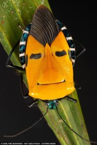 a98752_insect_3-elvis-presley